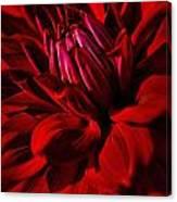 Dahlia Red Canvas Print