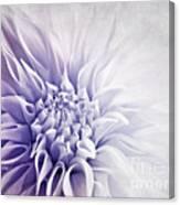 Dahlia Sun Canvas Print