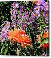 Dahlias And Asters Canvas Print