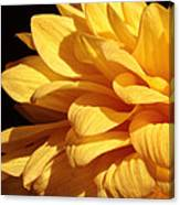 Dahlia's Light Side Canvas Print