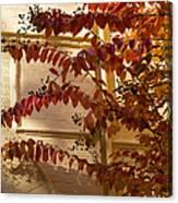 Dainty Branches - Warm Autumn Colors - Washington D C Facades Canvas Print