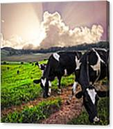 Dairy Cows At Sunset Canvas Print