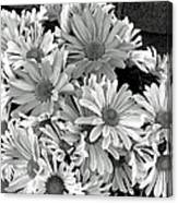Daises In Black And White Canvas Print