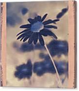 Daisies ... Again - 150ab Canvas Print