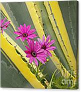Daisies And Cactus Canvas Print