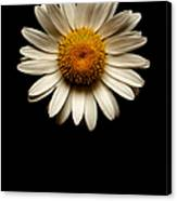 Daisies Are Not Flowers No Text Canvas Print