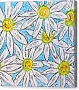 Daisies Daisies Canvas Print