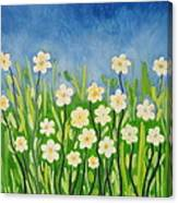 Daisies In The Spring Canvas Print