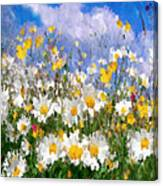 Daisies On A Hill - Impressionism Canvas Print