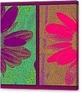 Daisies Purple Pink Canvas Print