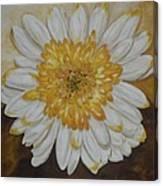 Daisy-2 Canvas Print