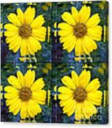 Daisy 8 Canvas Print