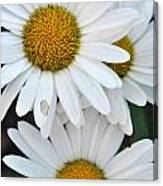 Daisy And Friends Canvas Print