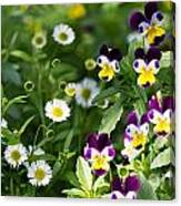 Daisy And Pansy Mix Canvas Print