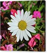 Daisy And Pink Flowers Canvas Print
