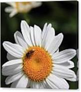 Daisy Bee Nice Canvas Print