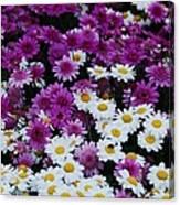 Daisy Bouquet From Dublin  Canvas Print