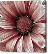 Daisy Daisy Blush Pink Canvas Print