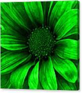 Daisy Daisy Neon Green Canvas Print