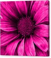 Daisy Daisy Neon Pink Canvas Print