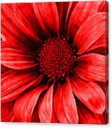 Daisy Daisy Neon Red Canvas Print