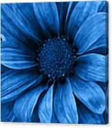 Daisy Daisy Pure Blue Canvas Print
