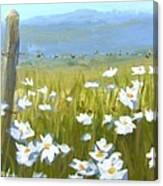 Daisy Dance Canvas Print