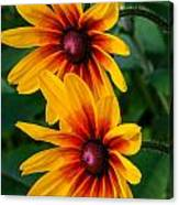 Daisy Duo Canvas Print
