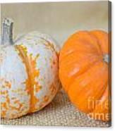 Daisy Gourd And Pumpkin Canvas Print