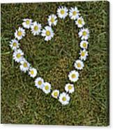 Daisy Heart Canvas Print