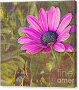 Daisy In Pink Canvas Print