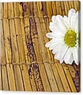 Daisy On Bamboo Canvas Print