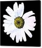 Daisy On Black Canvas Print