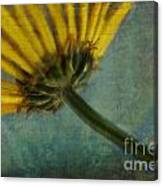Daisy Reach Canvas Print
