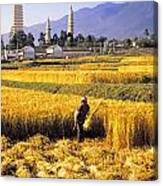 Dali Harvest Canvas Print