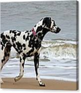 Dalmatian By The Sea Canvas Print