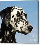 Dalmatian Dog Canvas Print