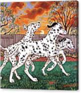 Dalmatians Three Canvas Print