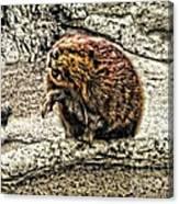 Dam Beaver Canvas Print