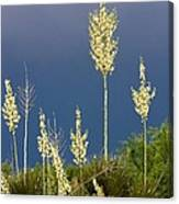 Dance Of The Yucca Canvas Print