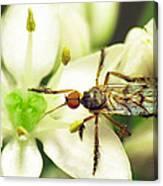 Dancefly On Onion Flower Canvas Print