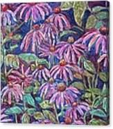 Dancing Coneflowers Canvas Print
