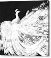 Dancing Peacock Black Canvas Print