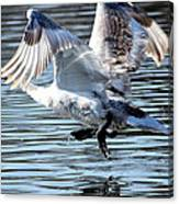 Dancing Swan Canvas Print