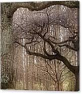 Dancing Trees Canvas Print