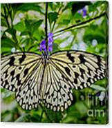 Dancing With Butterflies Canvas Print