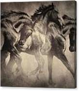 Dancing With Stallions Canvas Print