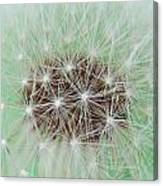 Dandelion Abstract 1 Canvas Print