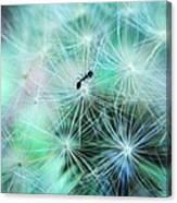 Dandelion Ant Canvas Print