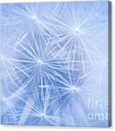 Dandelion Atmosphere Canvas Print